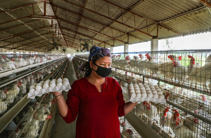 The Pramod Sawant-led government had banned the import of poultry from Karnataka after cases of bird flu were allegedly reported at some places there. (Credit: PTI Photo)