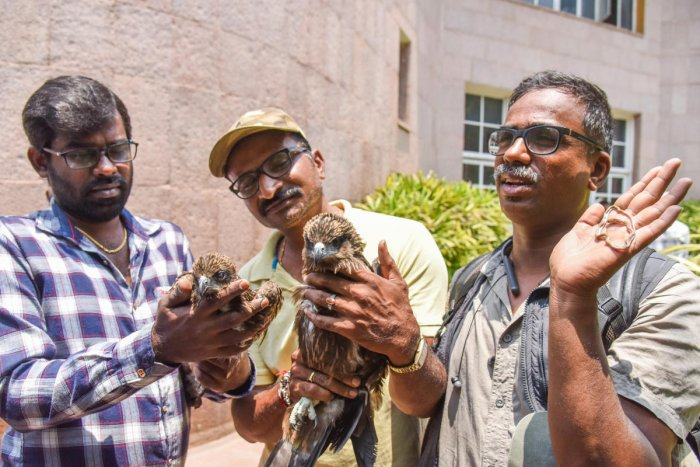 Rajesh and Mohan with a rescued kite, and Jayraj with a dead common Trikent snake in front of the BBMP office on Saturday. The men demanded remuneration and asked the BBMP DFO to give permission to rescue animals. DH Photo/S K Dinesh