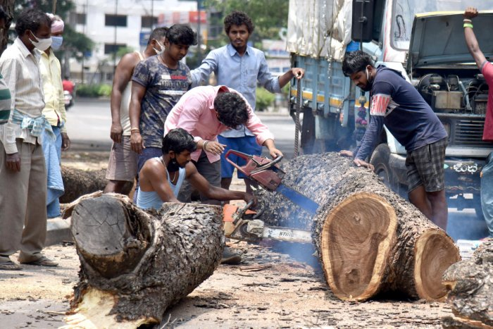 BBMP Forest department workers (Representative image/DH Photo)