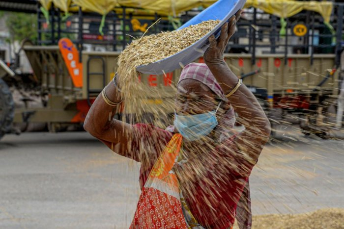 A woman wearing a mask winnows wheat grain at a market, during a government-imposed nationwide lockdown as a preventive measure against the spread of coronavirus, in Jalandhar, Saturday, April 25, 2020. (PTI Photo)