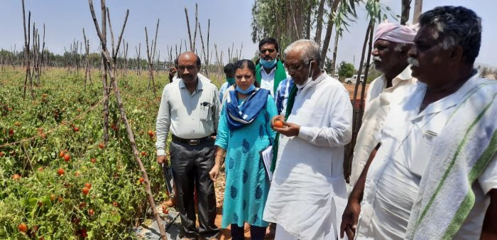 The Commission for Agricultural Costs & Prices president Hanumanagauda Belagurki inspects a field at Seesandra in Kolar taluk.
