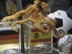 German angst as 'psychic' octopus tips Spain World Cup win