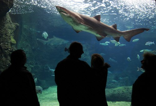 Man in Spain helps shark give birth