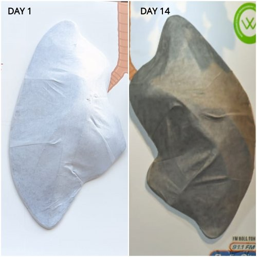 A similar lung installed in Delhi in November 2018took just sixdays to go black, whileanother one put up in Bengaluru in January 2018took 25 days to go black. (DH Photo)