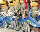 Customs' new recruits to sniff out narcotics