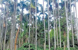 'Donated land' centre of controversy in Kalasa