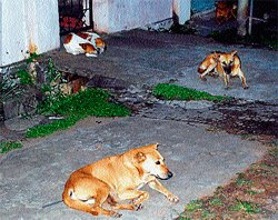Debate on stray dog continues...