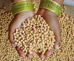 Indian scientists map Chickpea genome