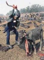 Indian leads bloodbath at Nepal's sacrifice fair