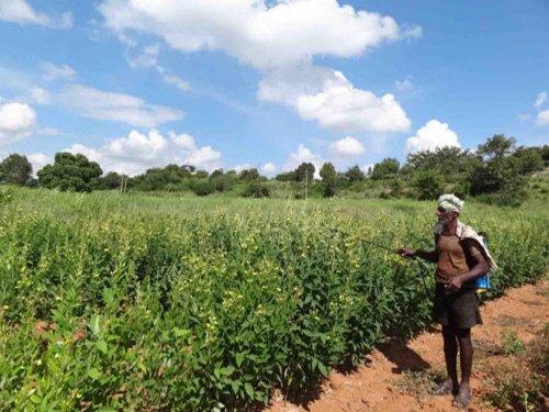Govt plans to ban harmful pesticides