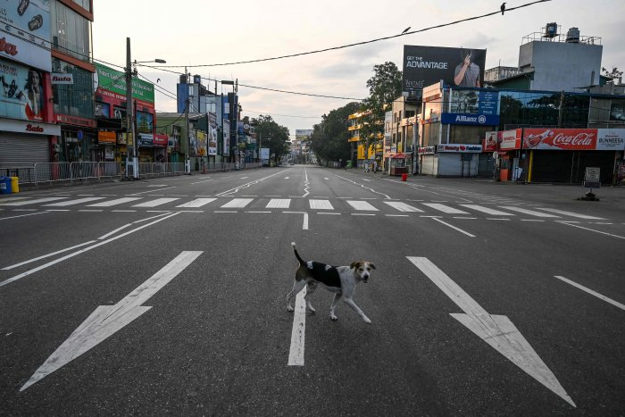 A stray dog crosses an empty road, after the authorities announced a weekend curfew in the country as a preventive measure against the spread of the COVID-19 novel coronavirus, in the suburb of Maharagama in Colombo. (AFP PHoto)