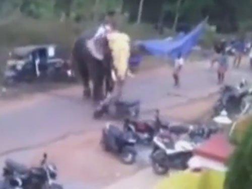 Elephant runs amok destroys vehicles