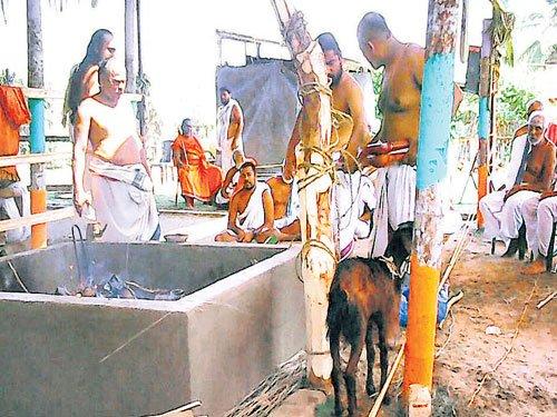 Brahmins hold yaga, sacrifice goats