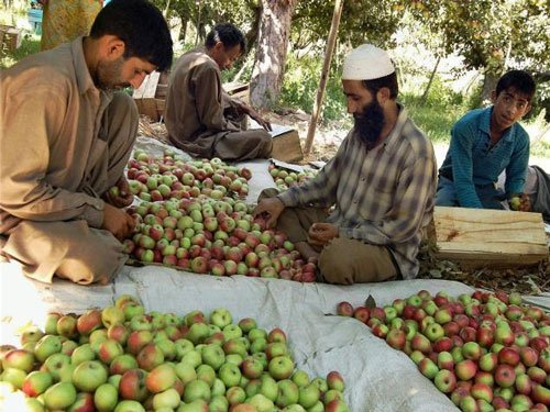 Official apathy, a problem for J&K's fruit industry