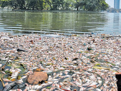 BBMP workers remove dead fish but Ulsoor lake still stinks