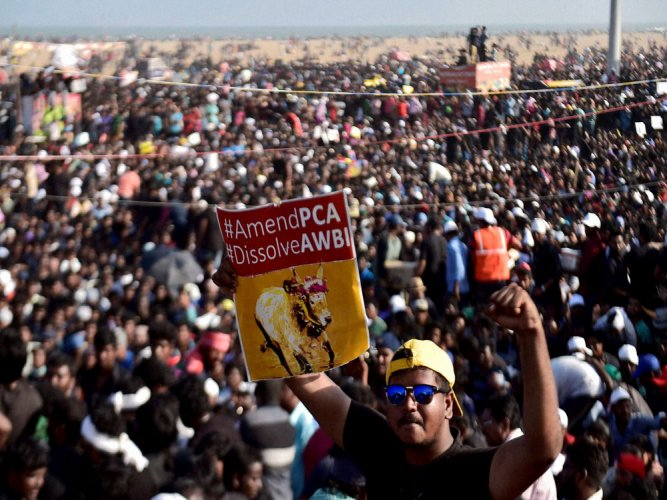 'Anti-nationals, anti-socials infiltrated pro-jallikattu protests'