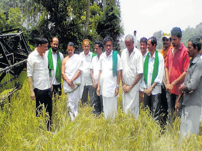 Farmers reap rich harvest from fallow land