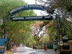 Entrance fee at Bannerghatta Biological Park goes up