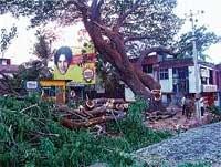 Trees make way to roads in Udupi