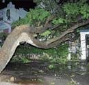 Rains, gusty winds bring down 36 trees in City
