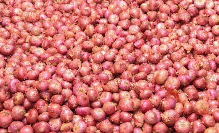 Onion acreage shrinks in Karnataka, brings tears in north