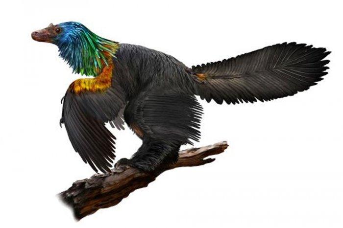 Tiny bird-like dinosaur with rainbow feathers discovered