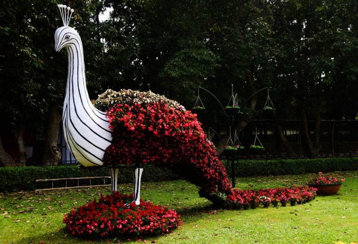 Head to the flower show at Lalbagh from this Friday