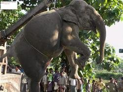 Trying to save young ones, seven elephants mowed down by train