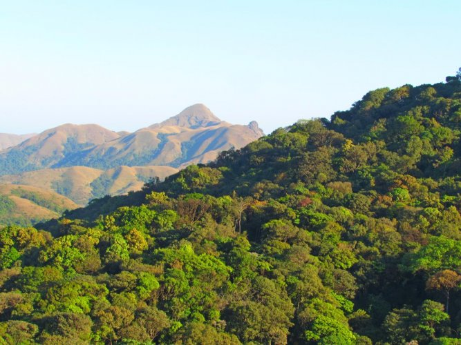 Hard-line conservationists, who are the petitioners, have tried to portray FRA as a law that encourages 'forest encroachments.' (DH File Photo)
