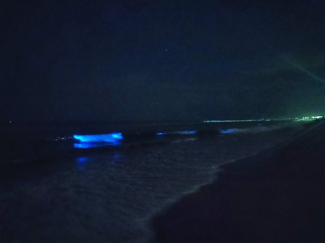 Thousands of people were elated over bioluminescent waves being spotted along the Chennai coast. (Photo Twitter/Ajay Shyam (@ajaw_))