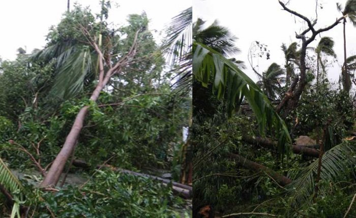 The casualties,caused as a result of either wall collapse or uprooting of trees, are reported in Thanjavur, Tiruvarur, Adiramapattinam, Thiruchitrambalam, Orathanadu, Melattur and Peravurani districts. (Image source: Twitter/@Mari30433373.jpg)