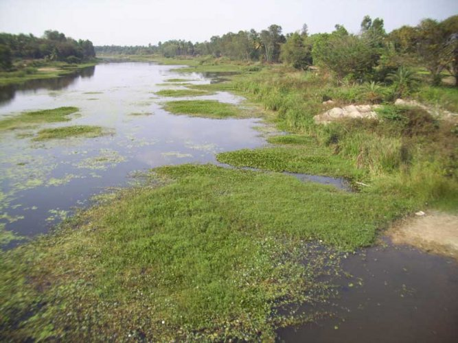About 80 lakh litres of chemical-laced water was drained into farmland and Shimsha river following the explosion of a boiler at a distillery plant of NSL Sugar Factory in Maddur taluk on November 21.