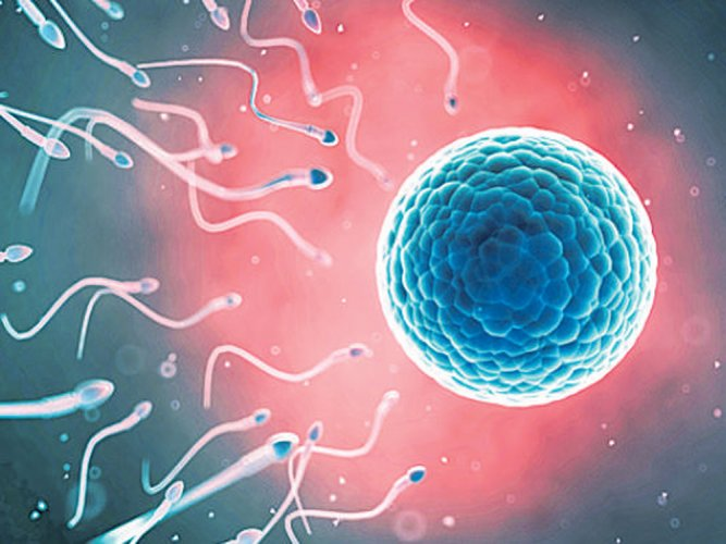Conventional methods to separate vigorous, motile sperm is tedious and may take up to several hours to perform, according to the research published in the journal PNAS. File photo
