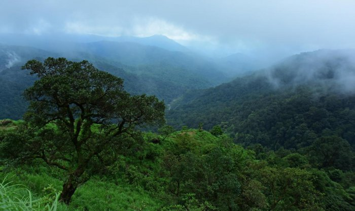 Karnataka could lose a whopping 177 hectares of biodiversity-rich Western Ghats forest land due to a proposed transmission line between Karnataka and Goa. DH file photo