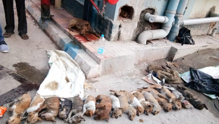 Dogs beaten to death at government hospital in Kolkata. (Source: Special arrangement)