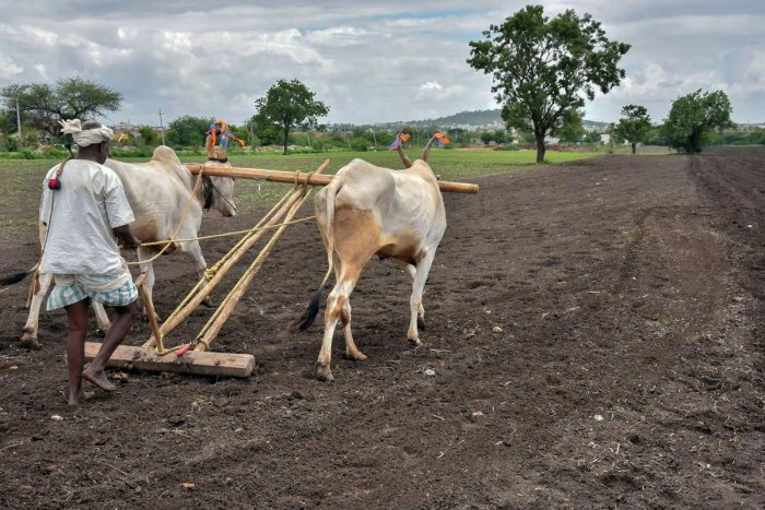 Between 2008 to 2015, 1.14 lakh farmers took their own lives with a yearly average of 14,255 after reaching a crest of 17,368 in 2009 and a trough of 11,772 by 2013. PTI photo for representation