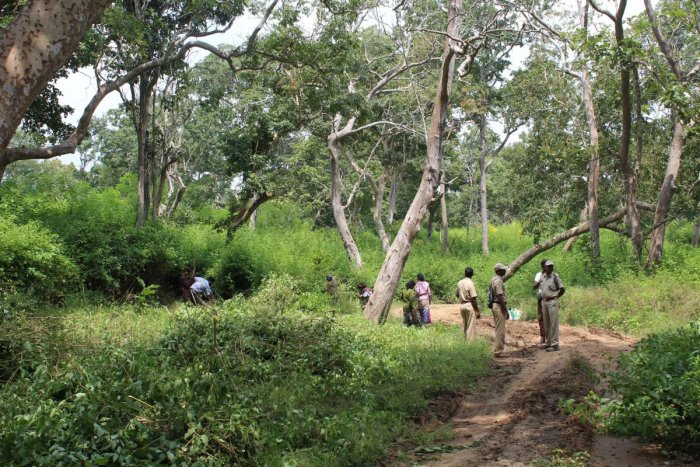 The Act's inclusion of commercial activities, which would introduce industries to protected forests, is a cause for concern. DH file photo