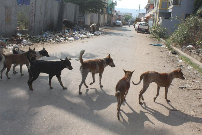 The BBMP Commissioner has asked the citizens not to throw food waste on streets as it attracts dogs. File photo