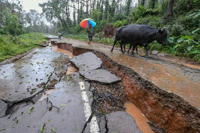 Livestock and people walk past a damaged road caused due to heavy monsoon rainfall, in Kodagu. PTI photo