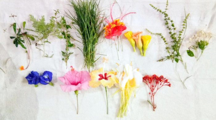 Flowers and leaves used for preparing chudi.