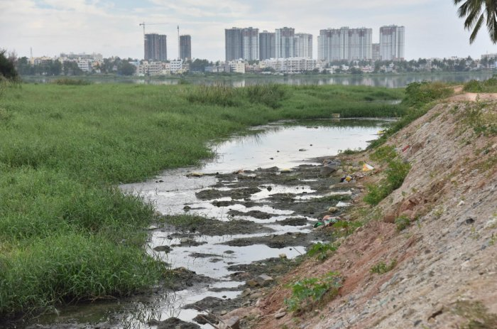 The tribunal's direction for maintaining a buffer zone and green belt of 75-metre in case of lakes, 50-metre for primary, 35-metre for secondary and 25-metre for tertiary 'Rajkulewas' had caused alarm bells ringing in Bengaluru. DH File Photo