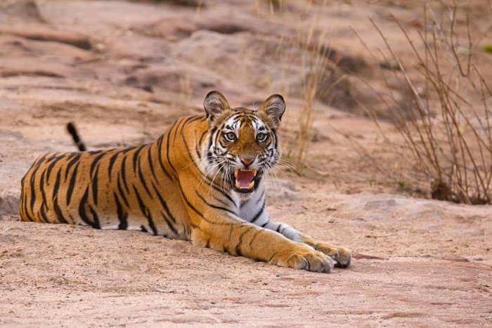 In the wildlife arena, the government-initiated projects -- Project Tiger and Project Elephant -- saw no change in their allocation compared to last year.