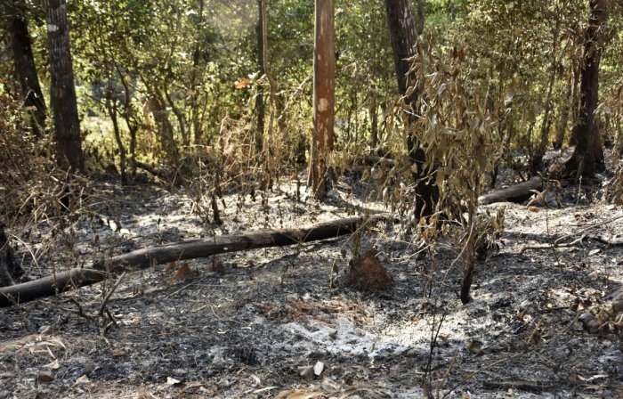 Evidently, whenever deforestation activity reached its peak, KFD flared up and the death toll rose. (DH Photo)