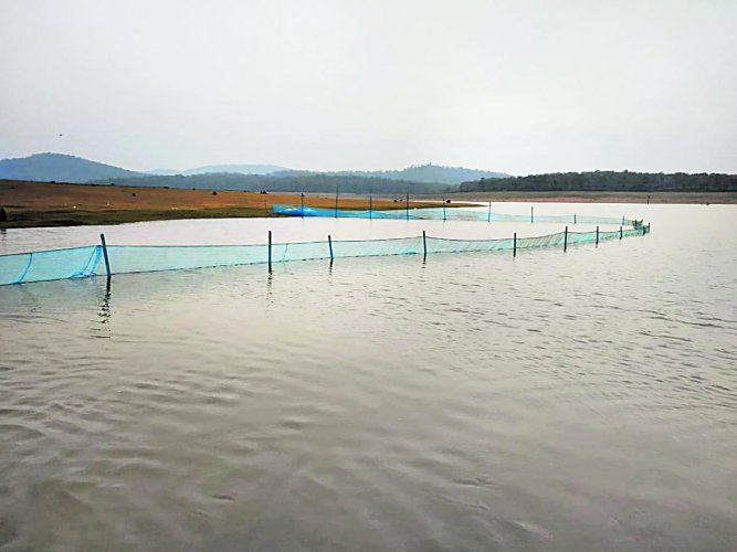 The fish enclosure set up at Harangi reservoir by ICAR - CIFRI team for research.