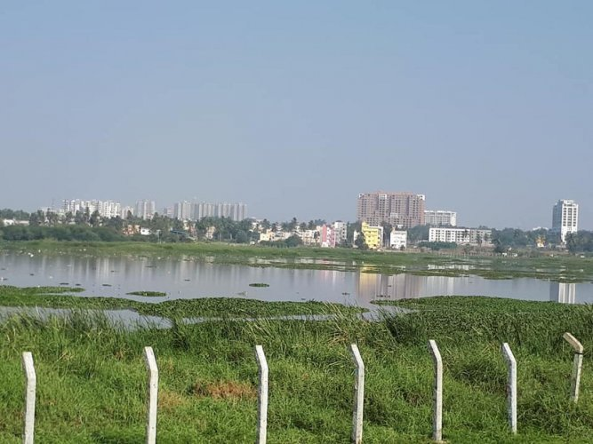 The National Green Tribunal constituted committee members were shocked to see the depleted waterbody during a surprise visit to the Varthur Lake on Tuesday. File photo