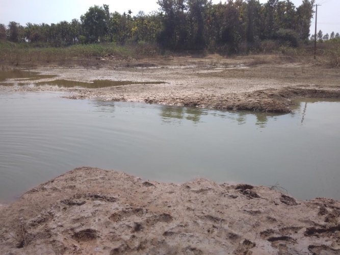 The depleting water level in Siddarakatte kere at Tarikere taluk is a cause for worry.
