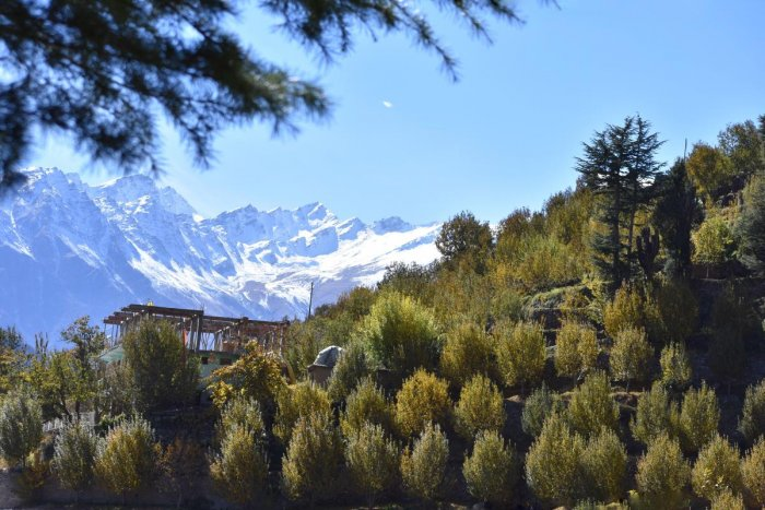Kinnaur Kailash mountains overlooking the apple orchards. PHOTOS BY AUTHOR