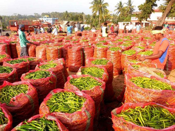 Farmers bring green chilly to the 'shandy' market in Shanivarasanthe for sale.