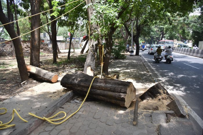 Three government agencies have sought permission to cut down thousands of trees. DH FILE PHOTO
