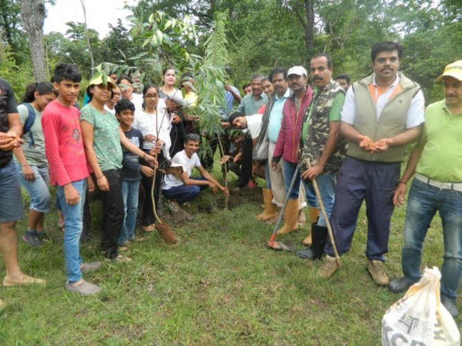 Art of Living Teachers Committee Head Alamengada Don Rajappa inaugurates a drive to plant saplings as part of 'Roots of Kodagu' campaign at Titimathi.